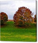 Fall Tree Line Canvas Print