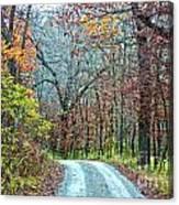 Fall Trees Canvas Print
