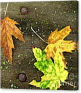 Fall Trio Canvas Print