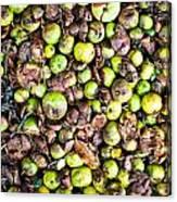 Fallen Apples Canvas Print