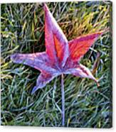 Fallen Autumn Leaf In The Grass During Morning Frost Canvas Print