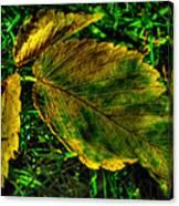 Fallen Elm Leaves Canvas Print