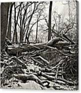 Fallen Soldiers Of The Forest Canvas Print