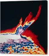 False-colour Skylab Image Of A Solar Prominence Canvas Print