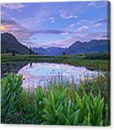 False Hellebore Surrounded Pond Canvas Print