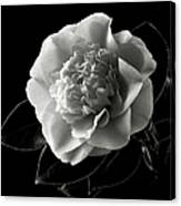 Fancy Camellia In Black And White Canvas Print