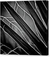 Fanned Leaves Canvas Print