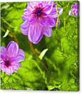 Fantasy Pink Dahlia Canvas Print