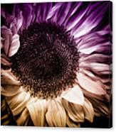 Fantasy Sunflower Canvas Print