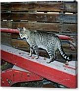 Farm Cat Canvas Print