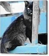 Farm Kitty On Blue Wagon Canvas Print