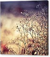 Fascinating Life Of Grass. Painting With Light Canvas Print