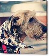 Airedale On The Fashion Runway Canvas Print