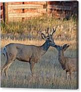 Father And Son Moment Canvas Print