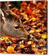 Fawn In Autumn Canvas Print
