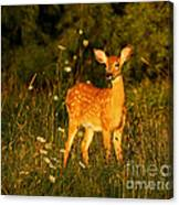 Fawn In Forest At Dusk Canvas Print