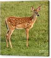 Fawn Ventures Out  Canvas Print