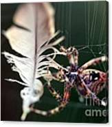Feather And Spider Canvas Print