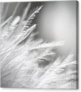 Feathery White Canvas Print
