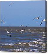 Feed Us - Ferry To Galveston Tx Canvas Print
