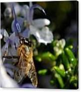 Feeding Bee Canvas Print
