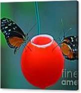 Feeding Butterflies Canvas Print