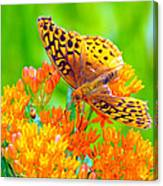 Feeding Butterfly Canvas Print