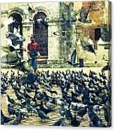 Feeding Pigeons Canvas Print