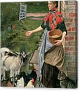 Feeding The Chickens Canvas Print