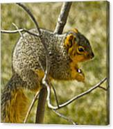 Feeding Tree Squirrel Canvas Print