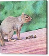 Feelin' Alittle Squirrely Canvas Print