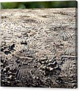 Fell By The Mighty Bark Beetle Canvas Print