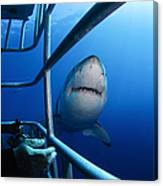 Female Great White And Underwater Canvas Print