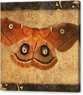 Female Moth Canvas Print