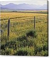 Fence And Barley Crop, Near Waterton Canvas Print
