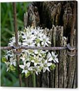 Fence And Flower Canvas Print