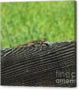 Fence Lizard Canvas Print
