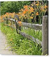 Fence Of Flowers Canvas Print