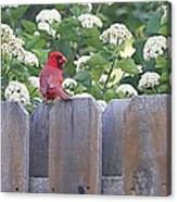 Fence Top Canvas Print