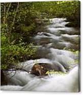 Fern Creek Horizontal Canvas Print