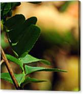 Fern Curve Canvas Print