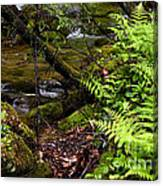 Fern Fallen Log And Stream Canvas Print