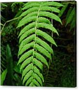 Fern Frond 0576 Canvas Print