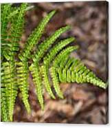 Fern Frond 1 Canvas Print