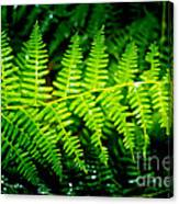 Fern II Canvas Print