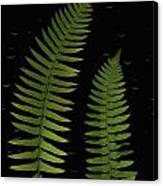 Fern Leaves With Water Droplets Canvas Print