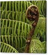 Fern Palm New Zealand Canvas Print