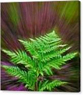 Fern Zoom Canvas Print