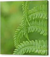 Ferns Take A Bow Canvas Print