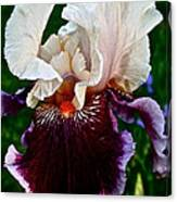 Festive Iris Canvas Print